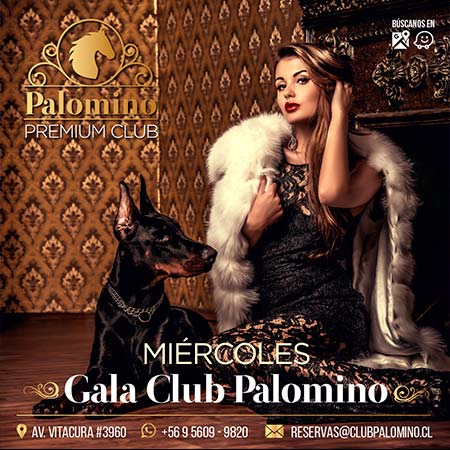 palomino-shows-miercoles